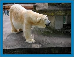 http://www.dubravec.cz/dubravcovi/jpg/zoo2005_2.jpg